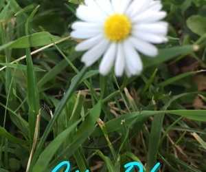 california, daisy, and flower image
