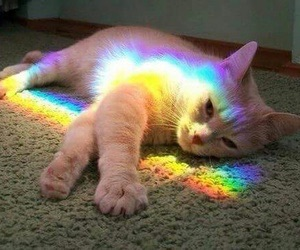 cat and rainbow image