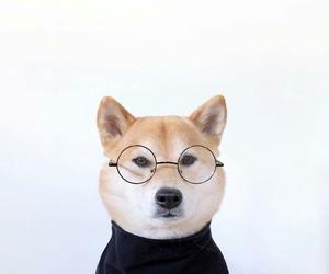 glasses, husky, and Steve Jobs image