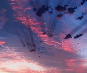sky, bird, and anime image