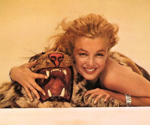 Marilyn Monroe, tiger, and vintage image