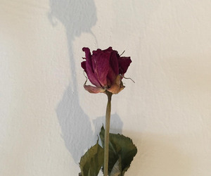 aesthetic, dead rose, and rose image