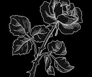 rose, black, and art image
