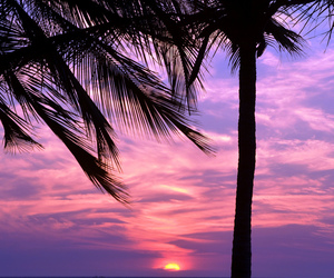sunset, palm trees, and pink image