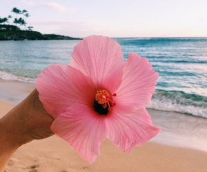 summer, beach, and flower image