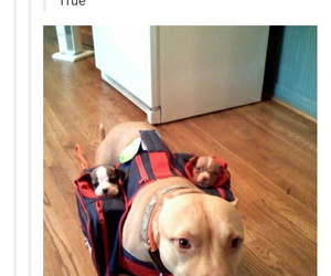 dogs, funny, and puppies image