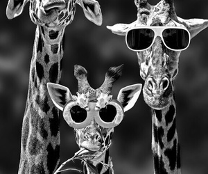 animal, Best, and giraffe image