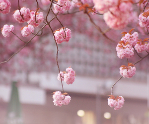 branches, pink, and spring image