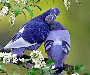 bird, Doves, and nature image