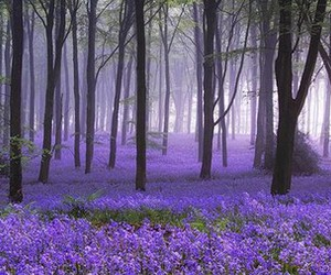 purple, forest, and flowers image