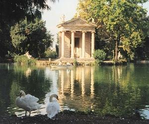 lake, nature, and Swan image
