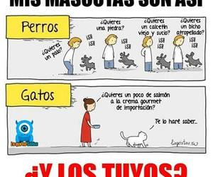 funny, lol, and Gatos image