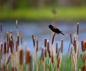 amazing, bird, and animal image