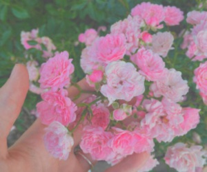 bright, pink, and pastel image