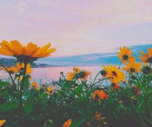 beach, bright, and daisy image