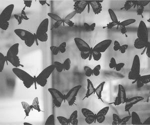 black and white, pretty, and butterflies image