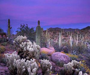 cactus, purple, and nature image