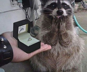 animal, funny, and ring image