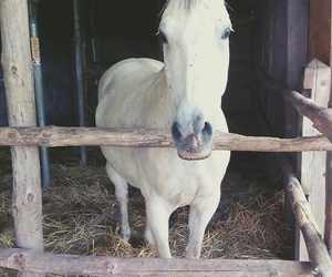 animal, equestrian, and white image