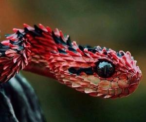 red, snake, and animal image