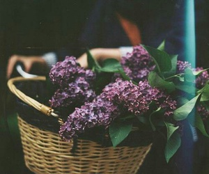 flowers, lilac, and vintage image
