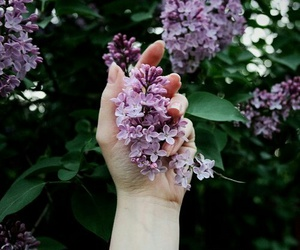 lilac, flowers, and spring image