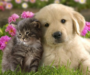dog, cat, and puppy image