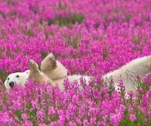 bear, flowers, and animal image