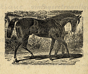 animal, farm, and horse image