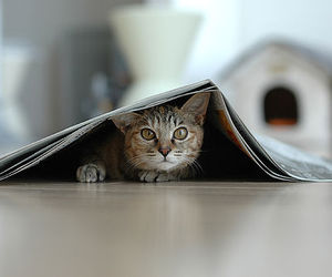 cats and newspaper image