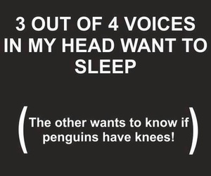 penguin, sleep, and funny image