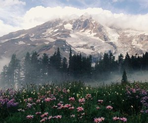 mountains, flowers, and nature image