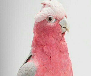 birds, cute, and parrot image