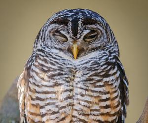 animal, bird, and camera image