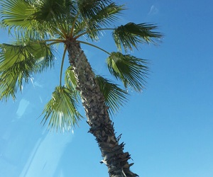 blue, summer, and palmboom image