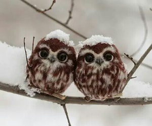 chouette, hibou, and eyes image