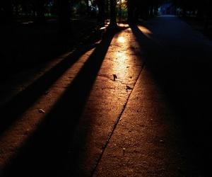 sun, tree, and droga image
