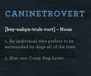 crazy, dictionary, and dog image