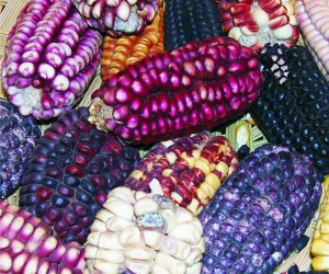 colourful, corn, and mexican food image