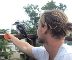 beauty, beer, and bird image