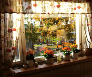 flowers, window, and home image