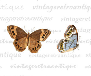 blue, butterflies, and color image