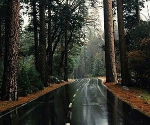 green, rain, and forest image