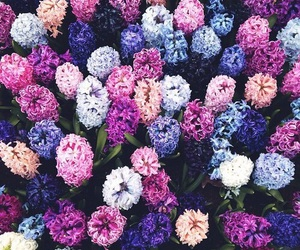 flowers, purple, and pink image