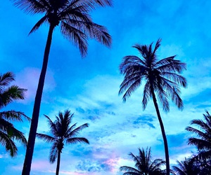 palm trees, thailand, and wallpaper image