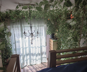 plants, room, and aesthetic image