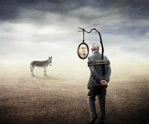 donkey, mirror, and person image