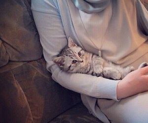 cat and hijab image