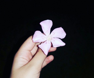 flower and night image