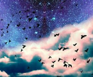 bird, sky, and galaxy image